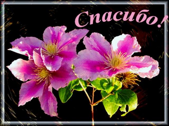 http://easyengl.ucoz.ru/_fr/5/7870452.jpg